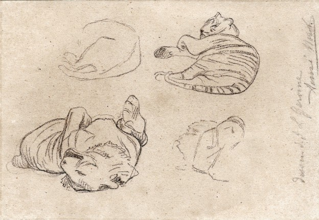 Tigre gerome1